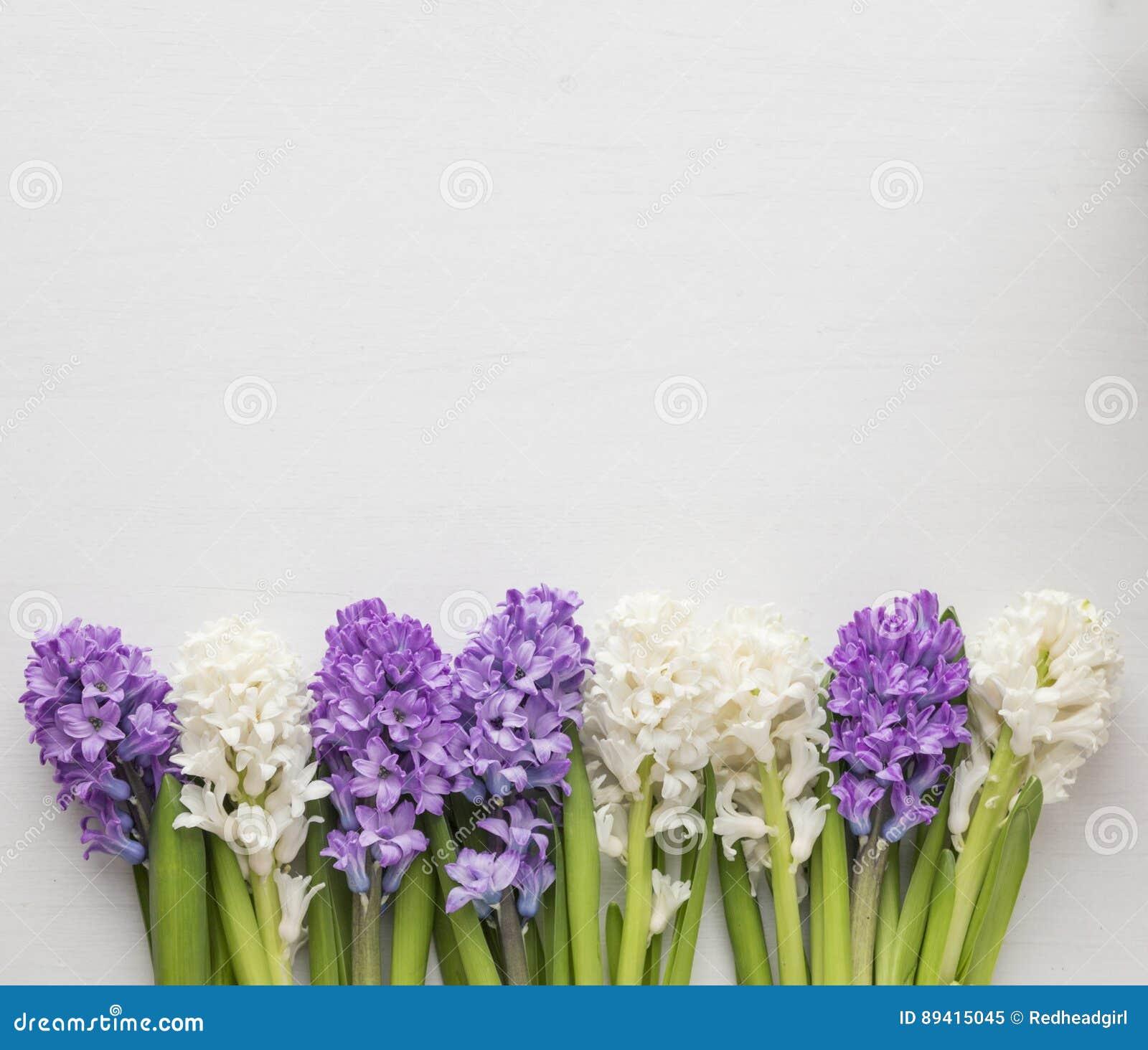 Fileira roxa e branca do jacinto