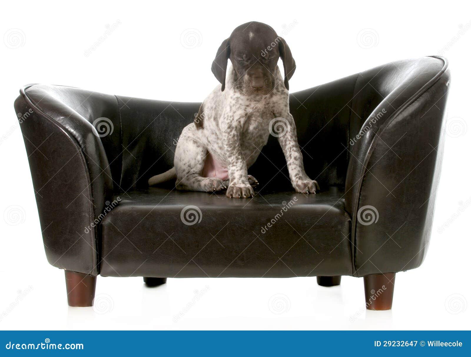 Download Filhote de cachorro bonito imagem de stock. Imagem de raça - 29232647
