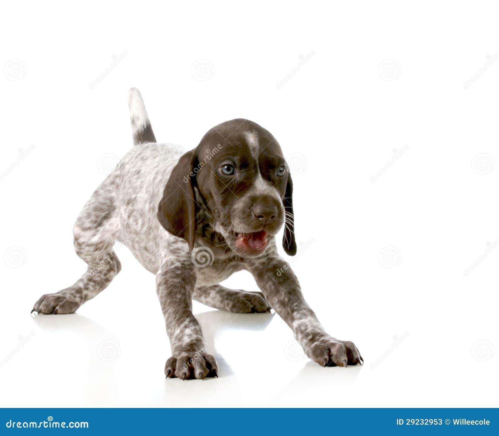 Download Filhote De Cachorro Brincalhão Imagem de Stock - Imagem de gesto, bark: 29232953