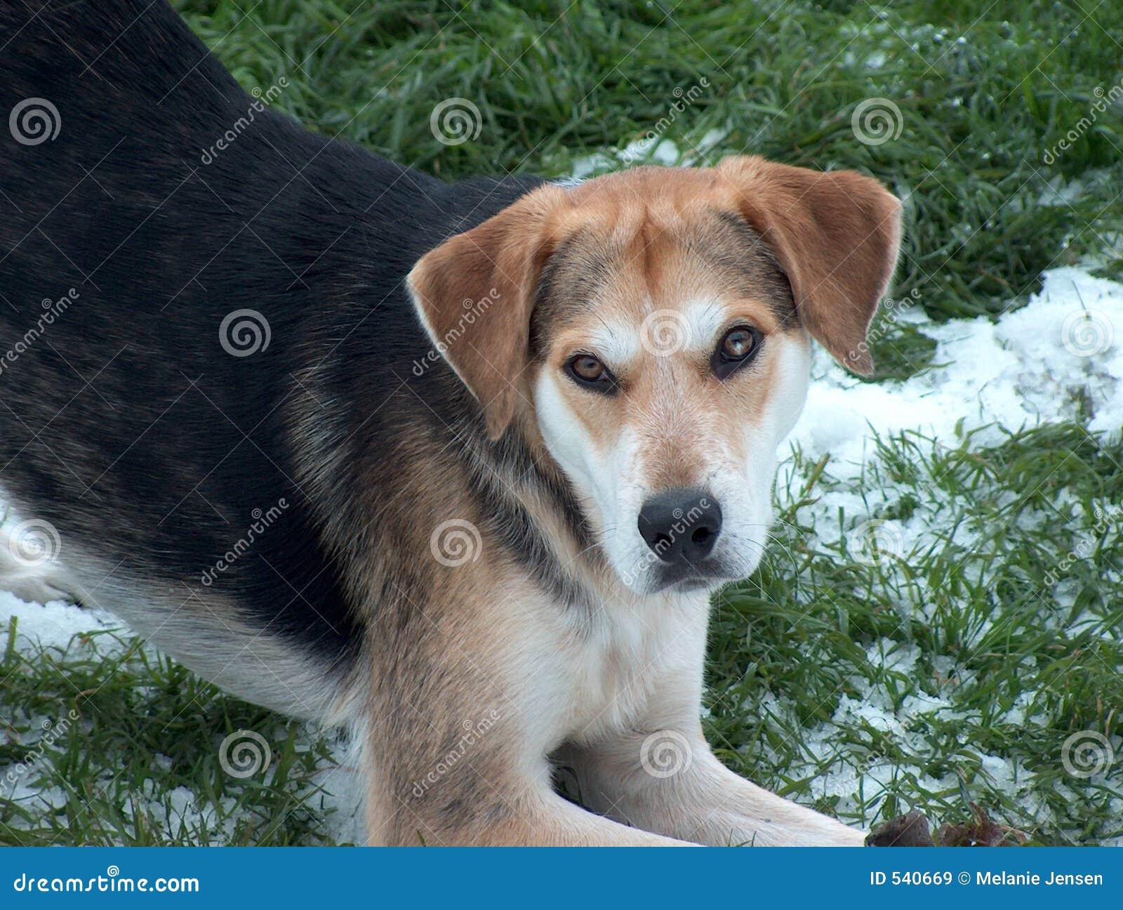 Filhote de cachorro brincalhão