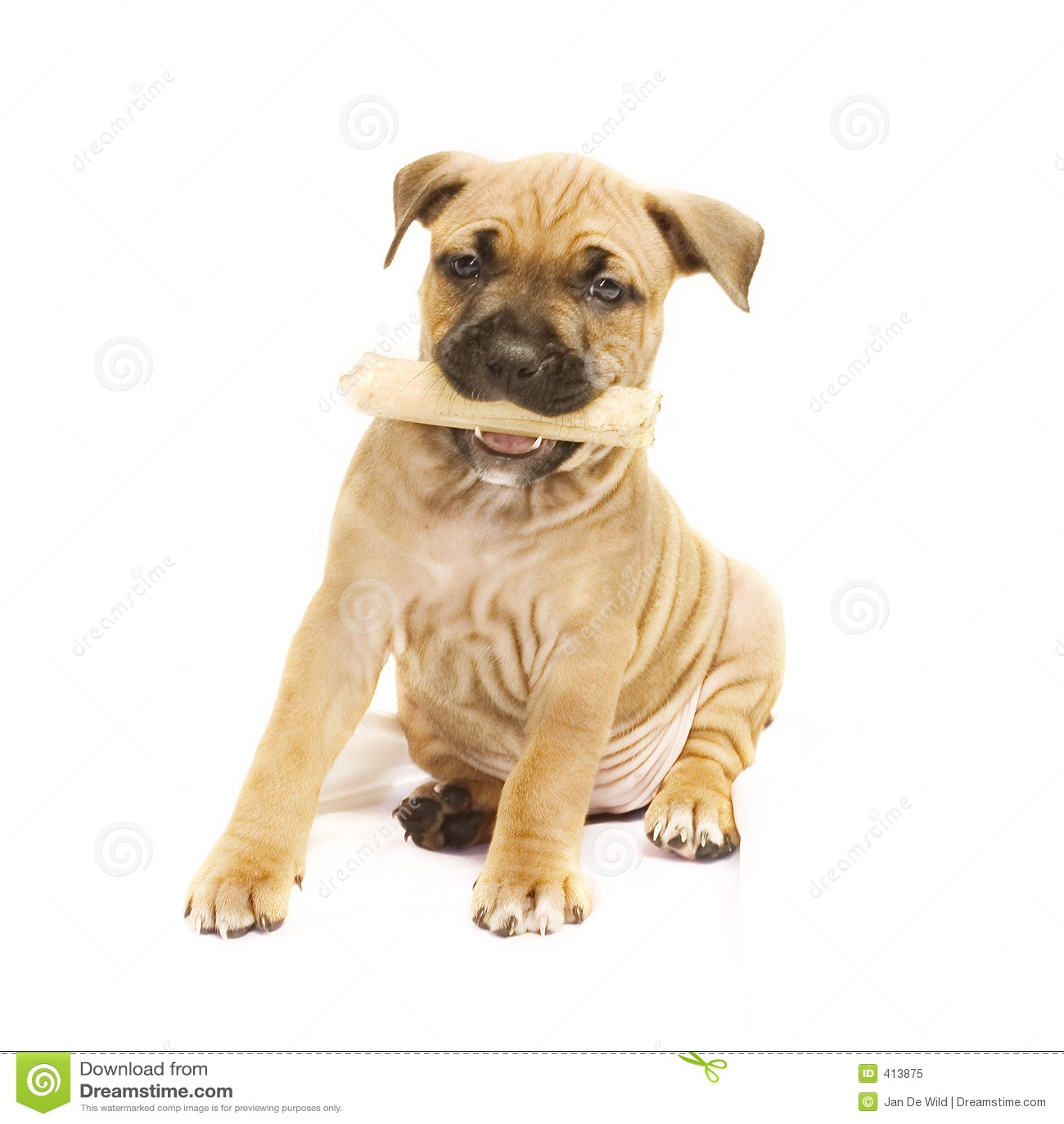 Filhote de cachorro com osso