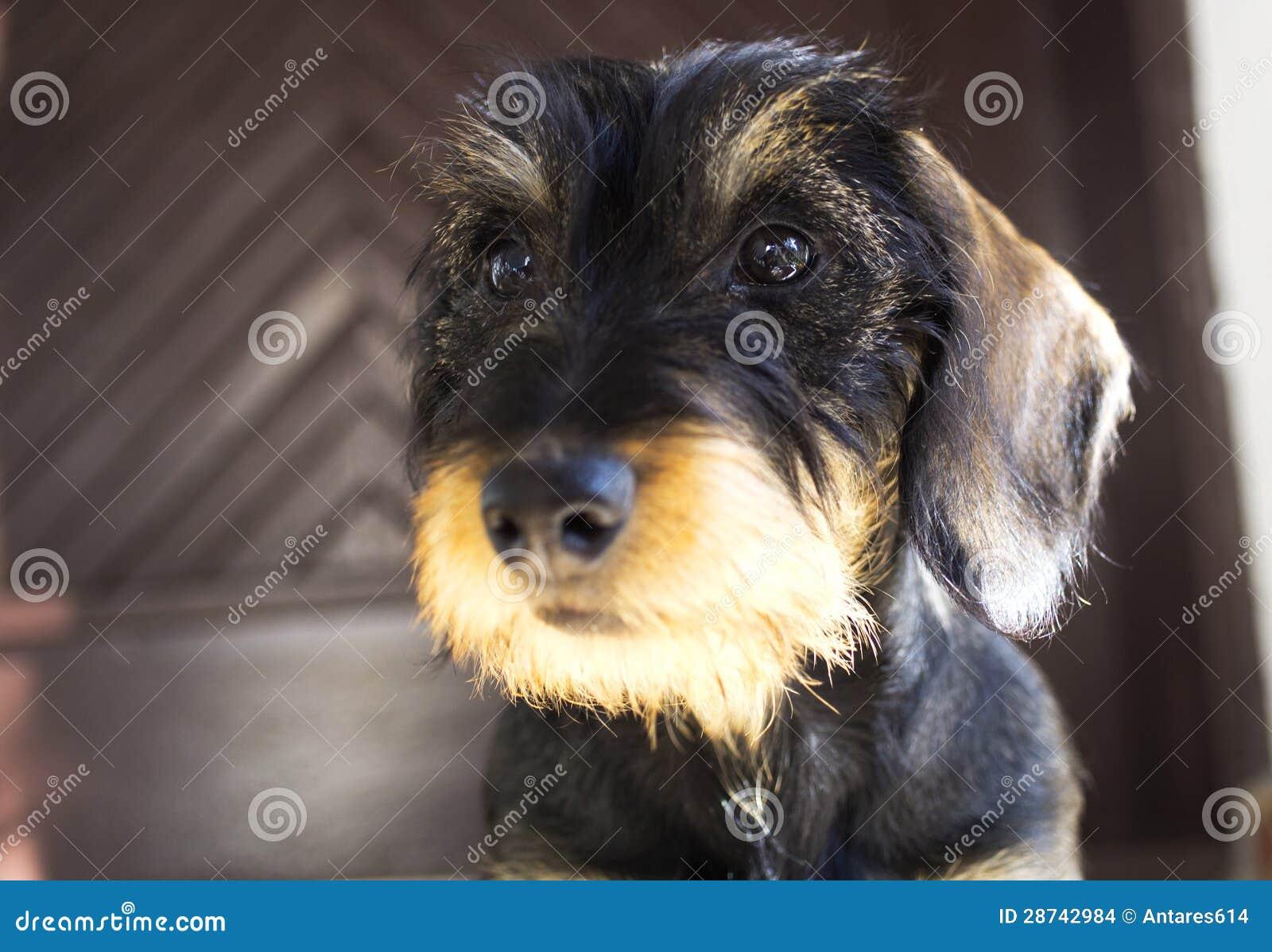 Filhote de cachorro do cão