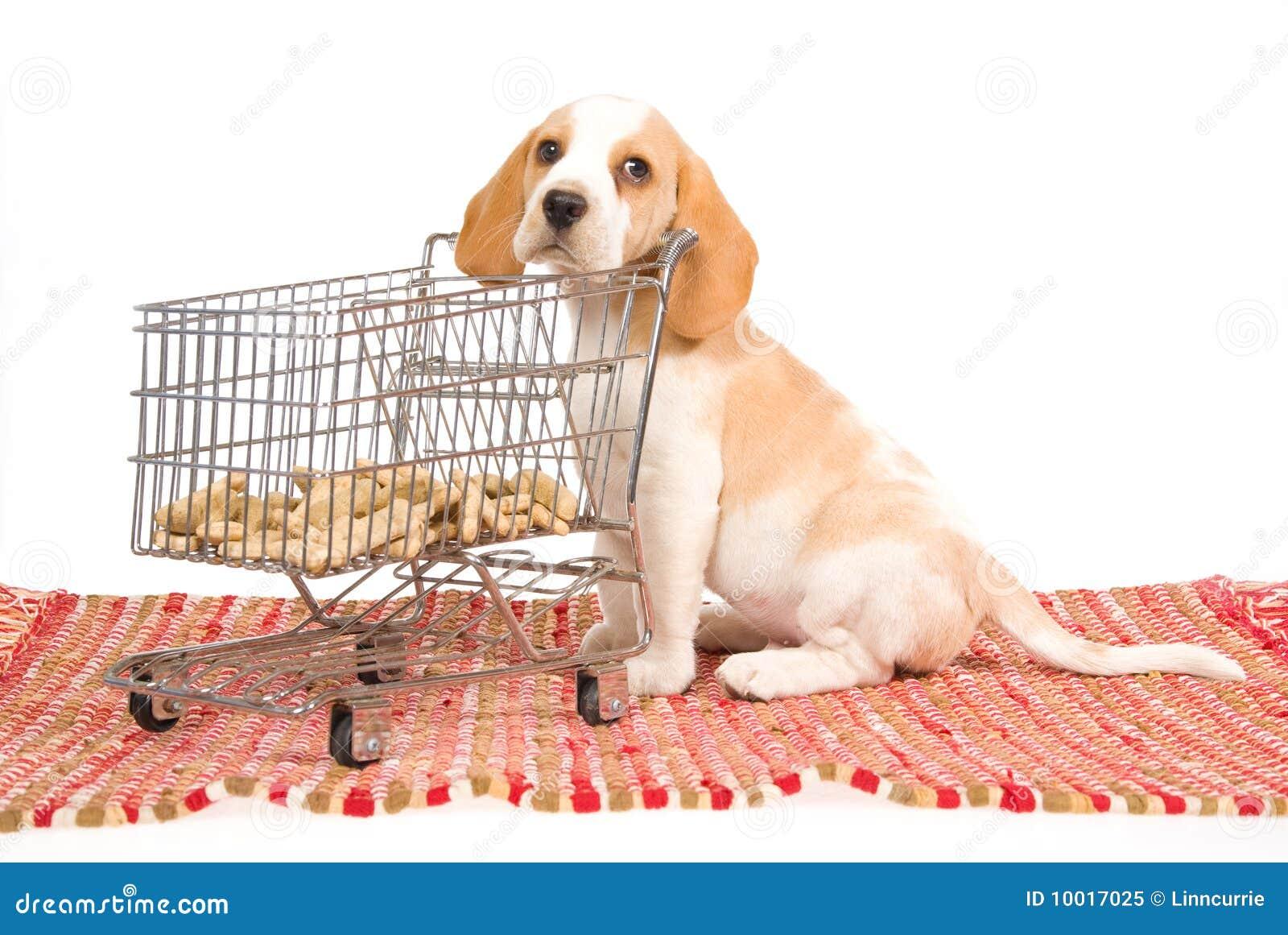 Filhote de cachorro do lebreiro com o mini carro de compra