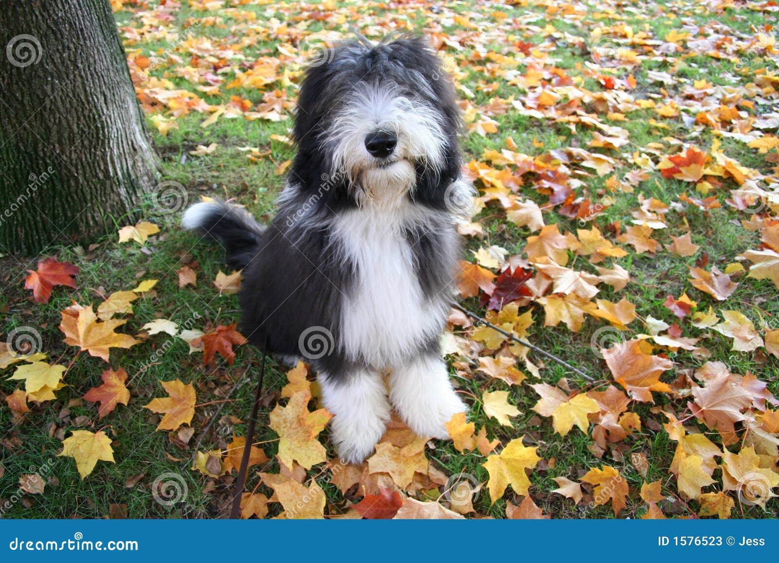 Filhote de cachorro do outono