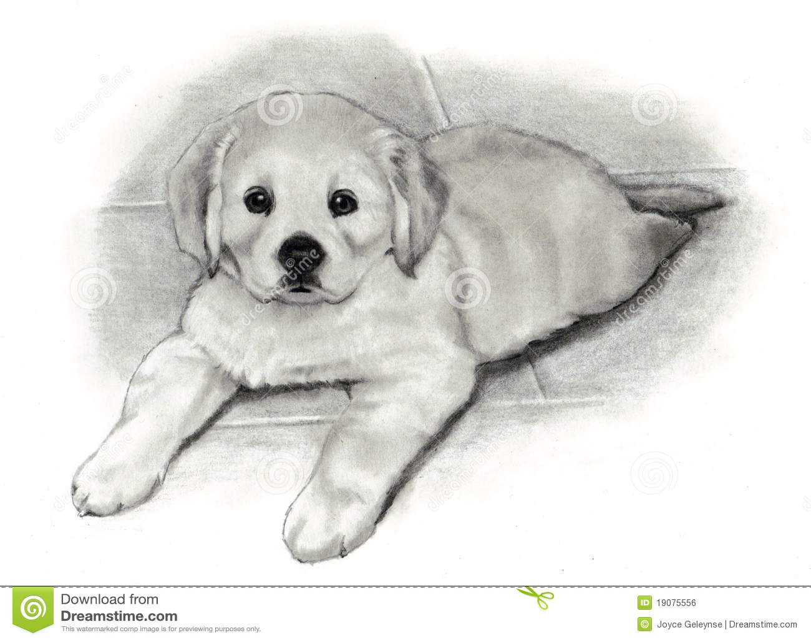 Filhote De Cachorro Do Retriever Dourado De Desenho De Lapis