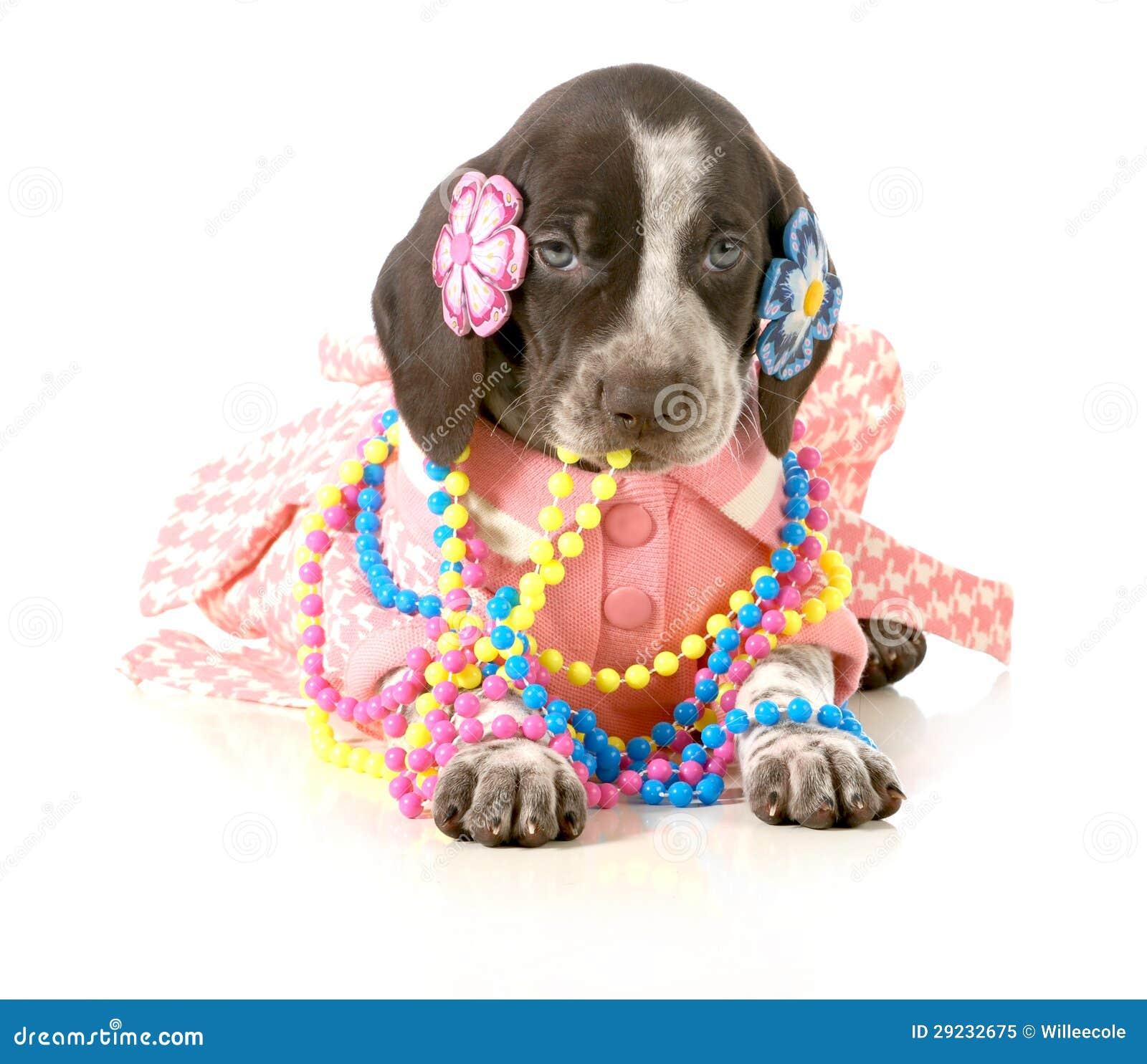 Download Filhote de cachorro fêmea imagem de stock. Imagem de rosa - 29232675