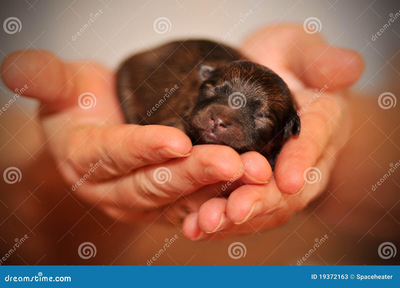 Filhote de cachorro nas mãos
