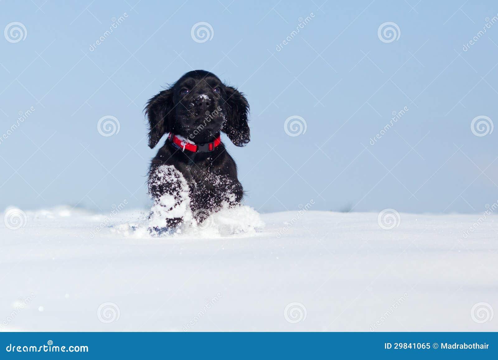 Filhote de cachorro running bonito na neve