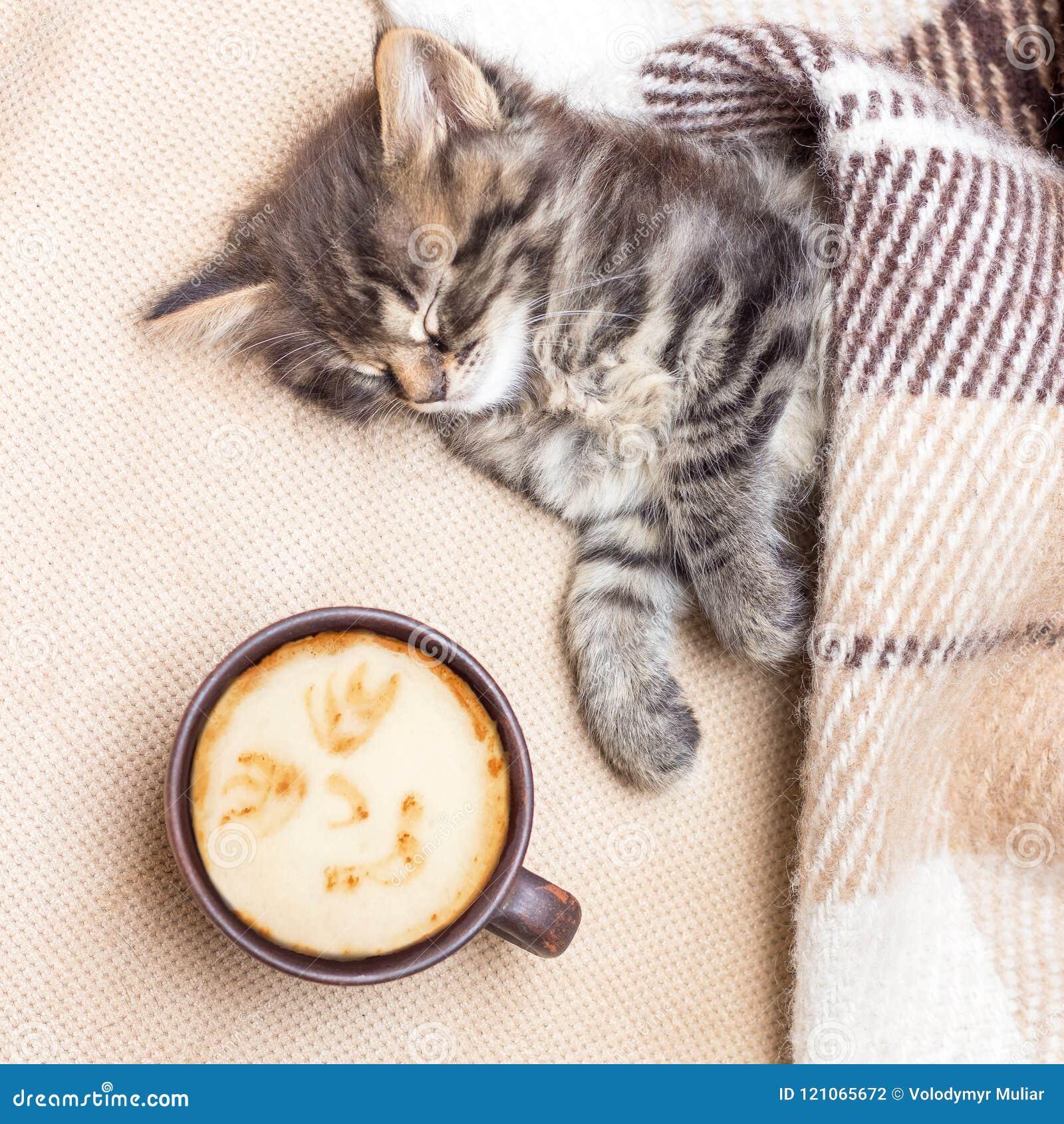 Filiżanki kawy pobliska figlarka która jest uśpiona troszkę Gorąca kawa ja