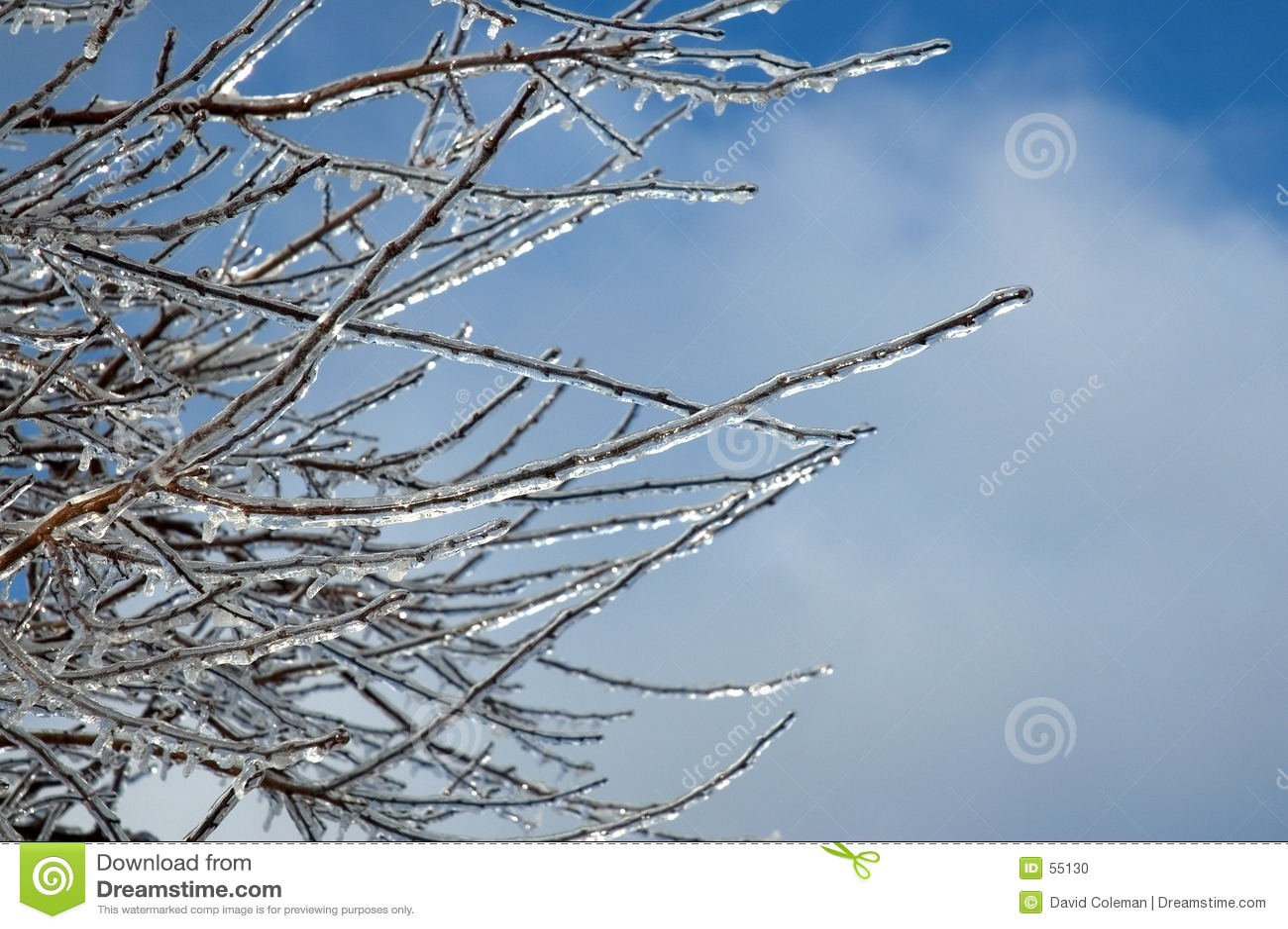 Filiais congeladas de encontro a um céu azul
