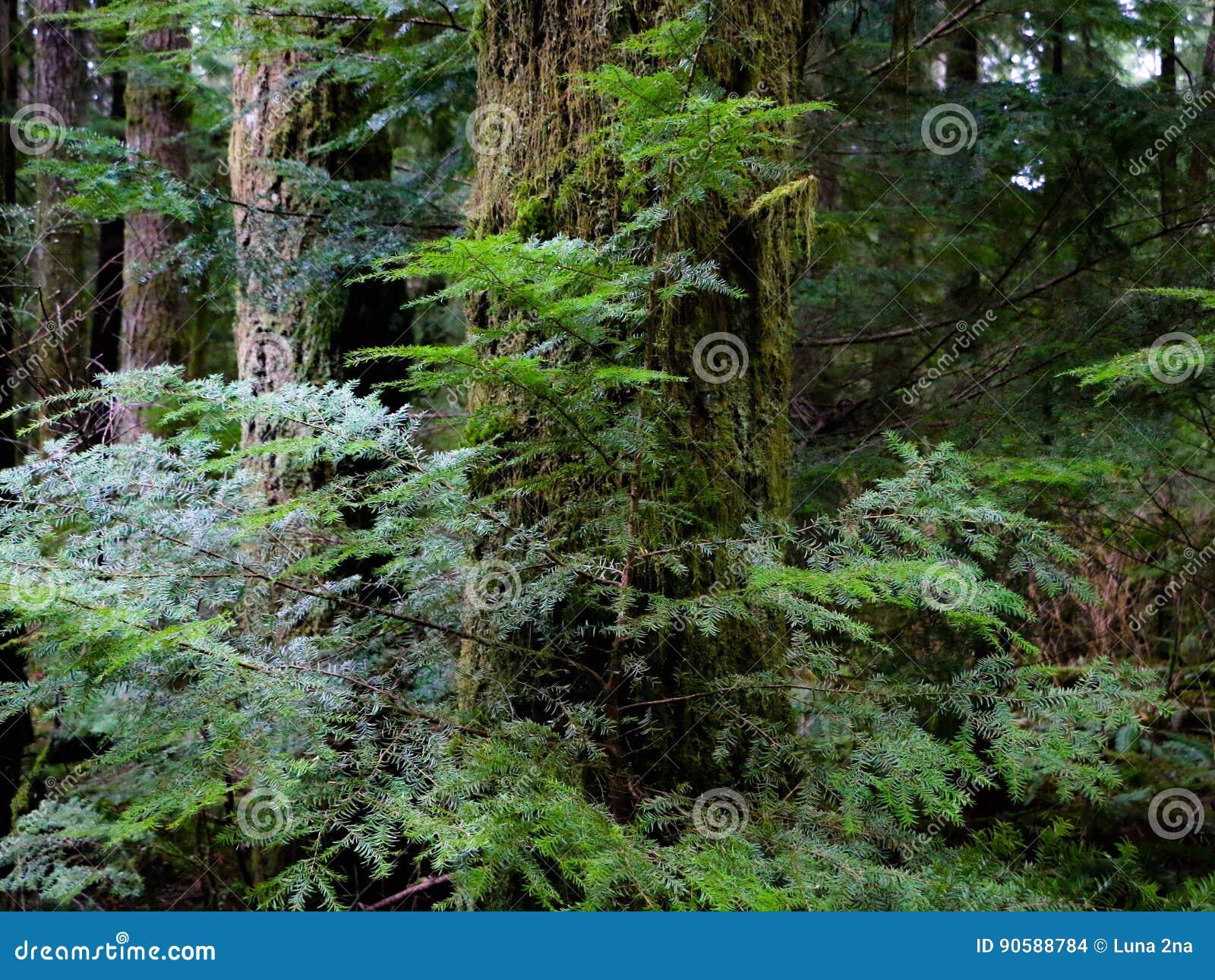 Filiais de árvore com as folhas com nebuloso