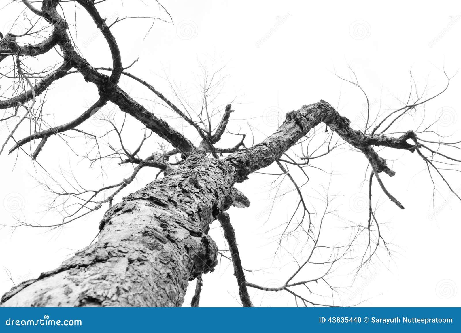 Filial de árvore inoperante