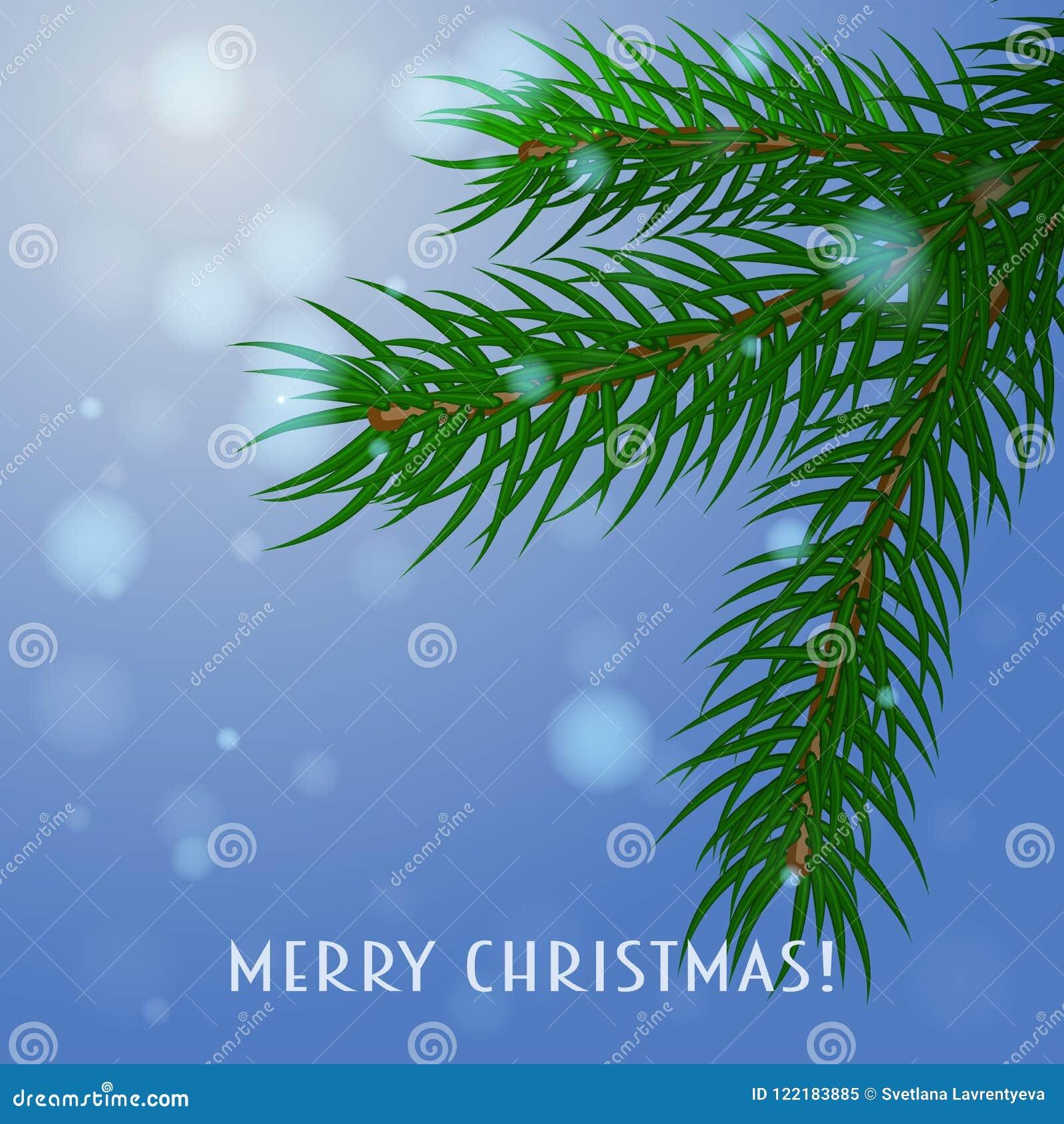 Filiale Cartolina di Natale, vettore Un ramo dell abete rosso su un fondo blu