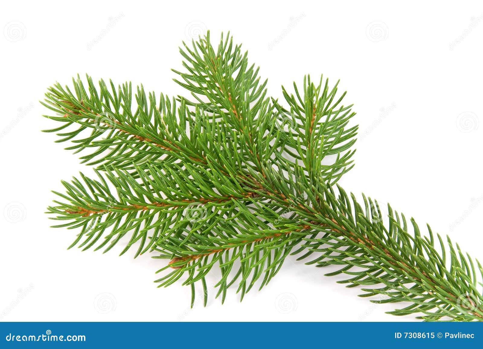 Filiale di albero