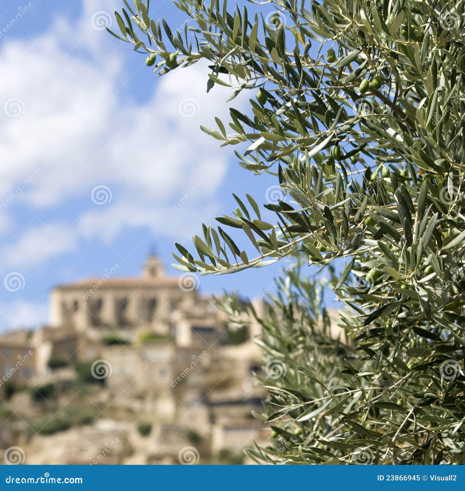 Filiale di olivo la provenza fotografia stock libera da for Acquisto piante olivo