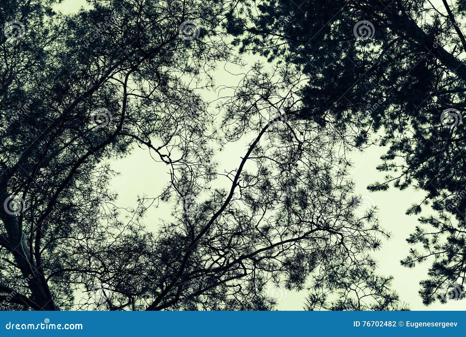 Filialer av löst sörjer träd ovanför himlen