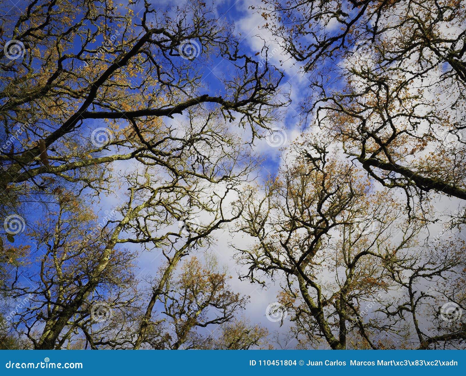 Filialer av träd i himlen