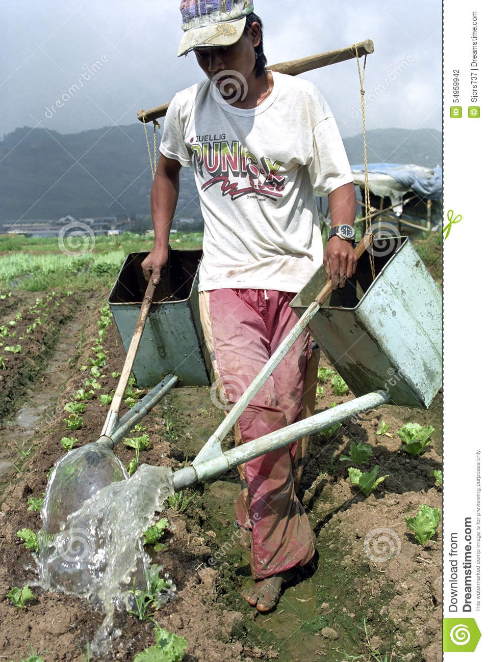 Filipino man and irrigation young vegetable plants