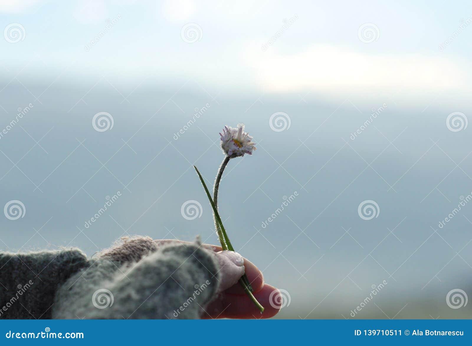 Fille avec la main de gant tenant une belle marguerite blanche sur le horizont Belle nature tranquille représenter le moment pais