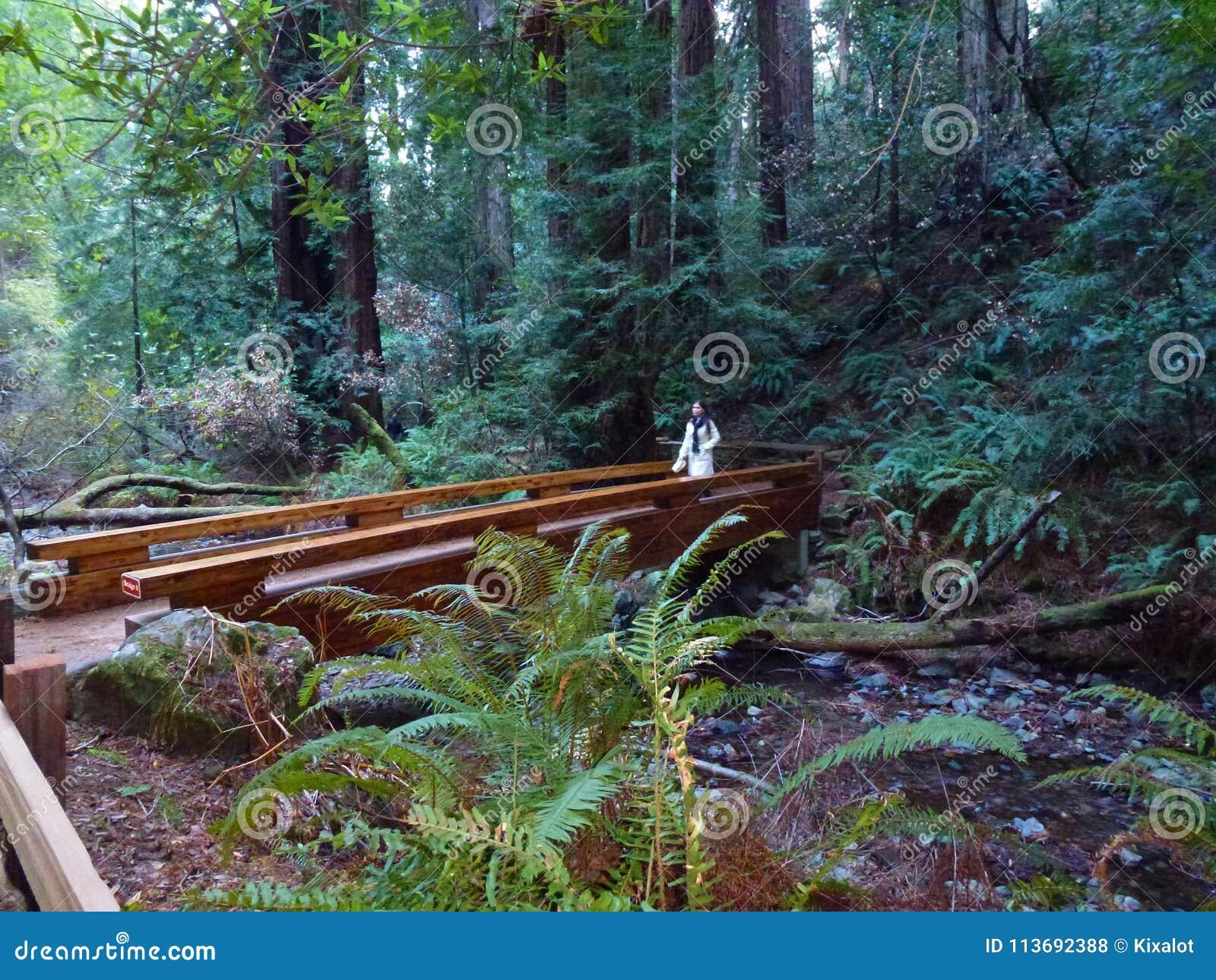 Fille sur la promenade en Muir Woods National Monument
