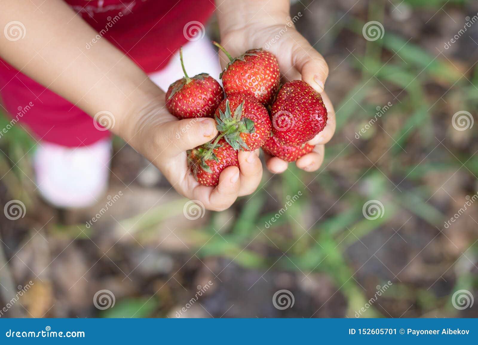 Fille tenant les fraises crues aux mains, à la vue supérieure et à l arrière-plan brouillé