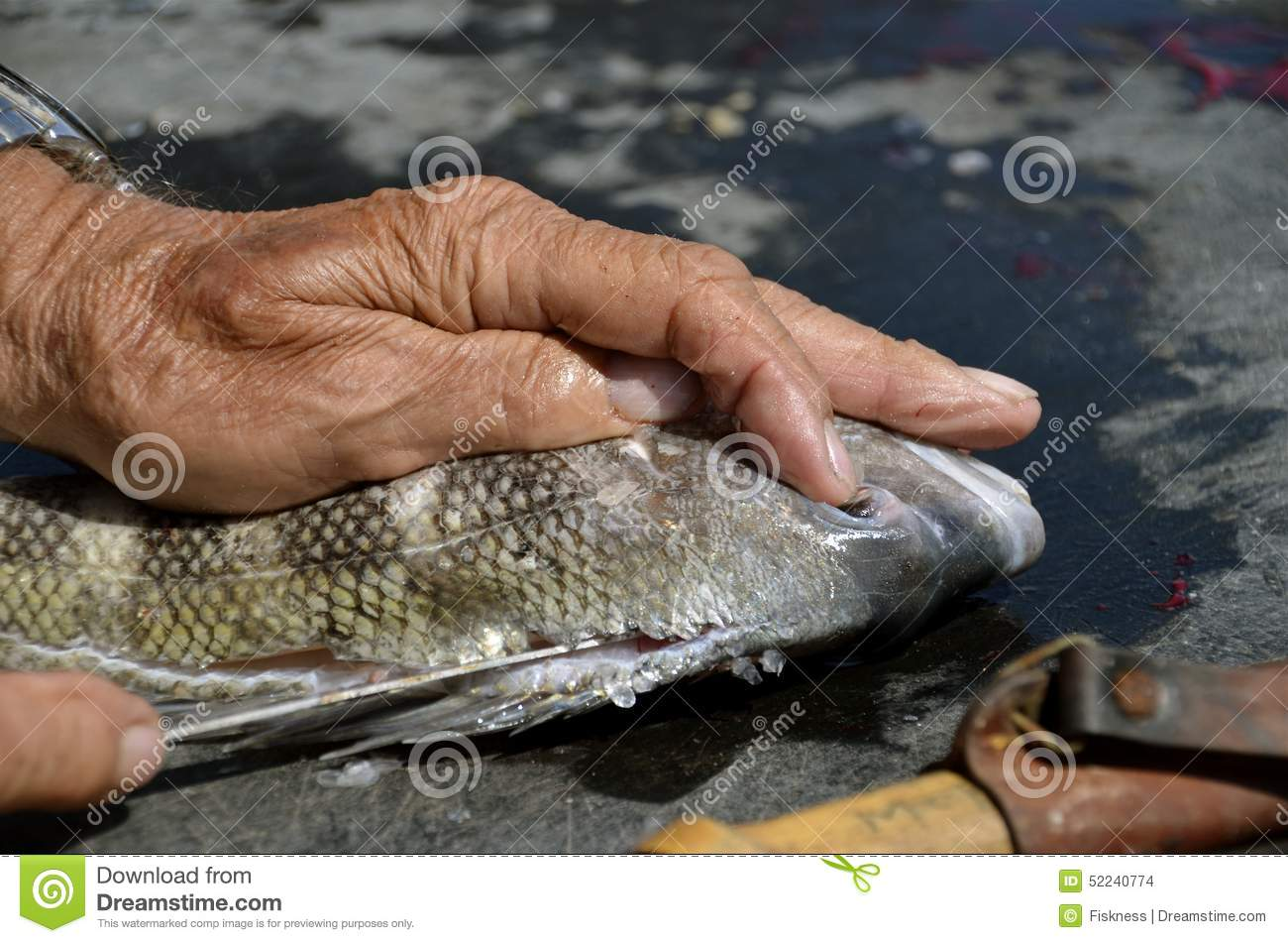 Filleting a fish
