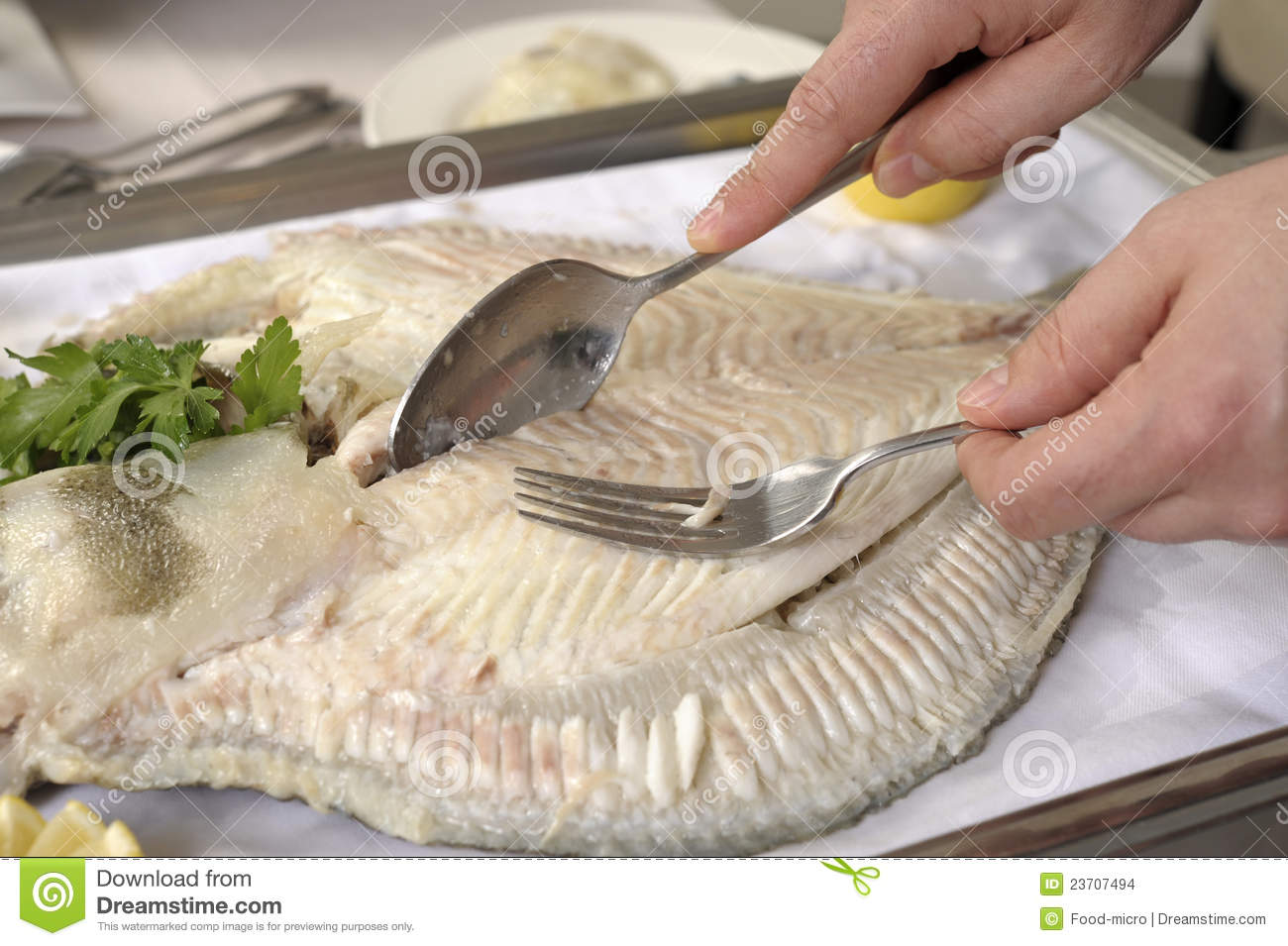 Filleting a poached turbot stock images image 23707494 for Turbot fish price