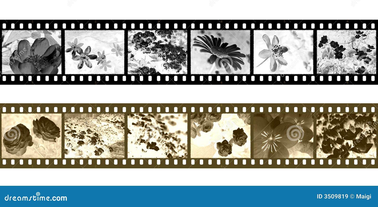 Filmstrip Negatives Royalty Free Stock Images - Image: 3509819