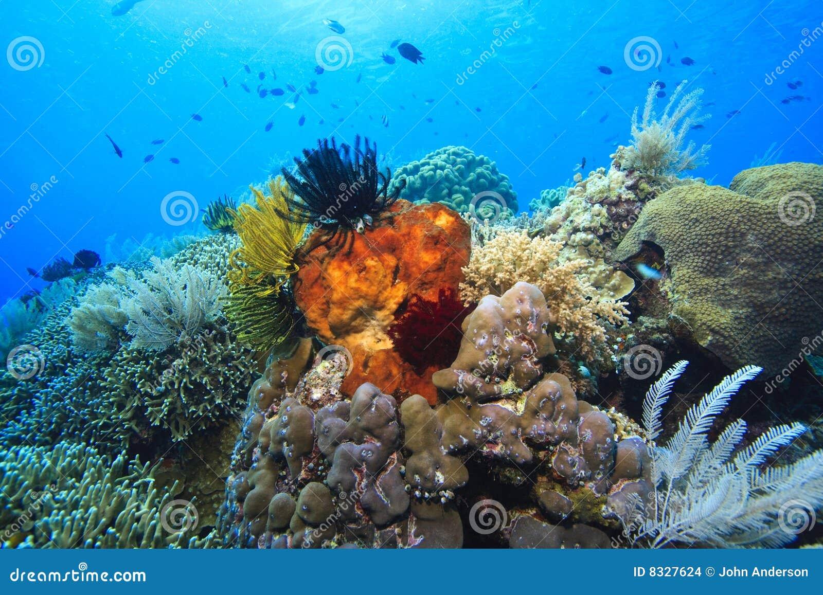 Filones coralinos