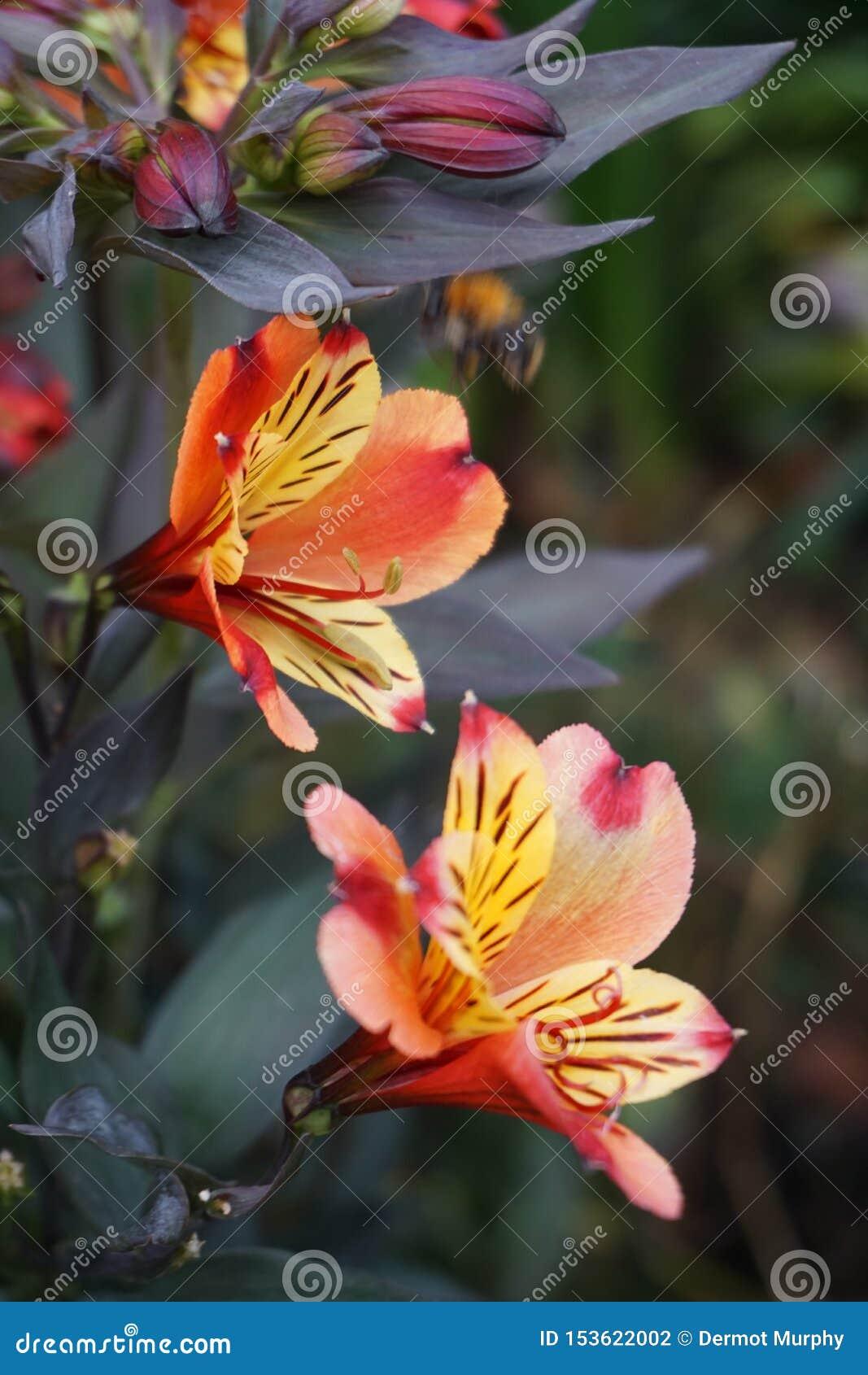 Fim acima de uma flor