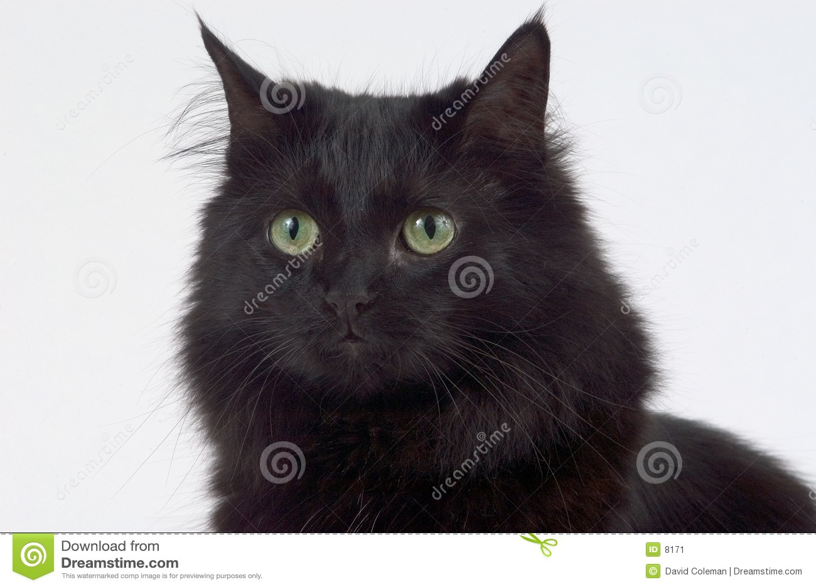 Fim acima do gato preto