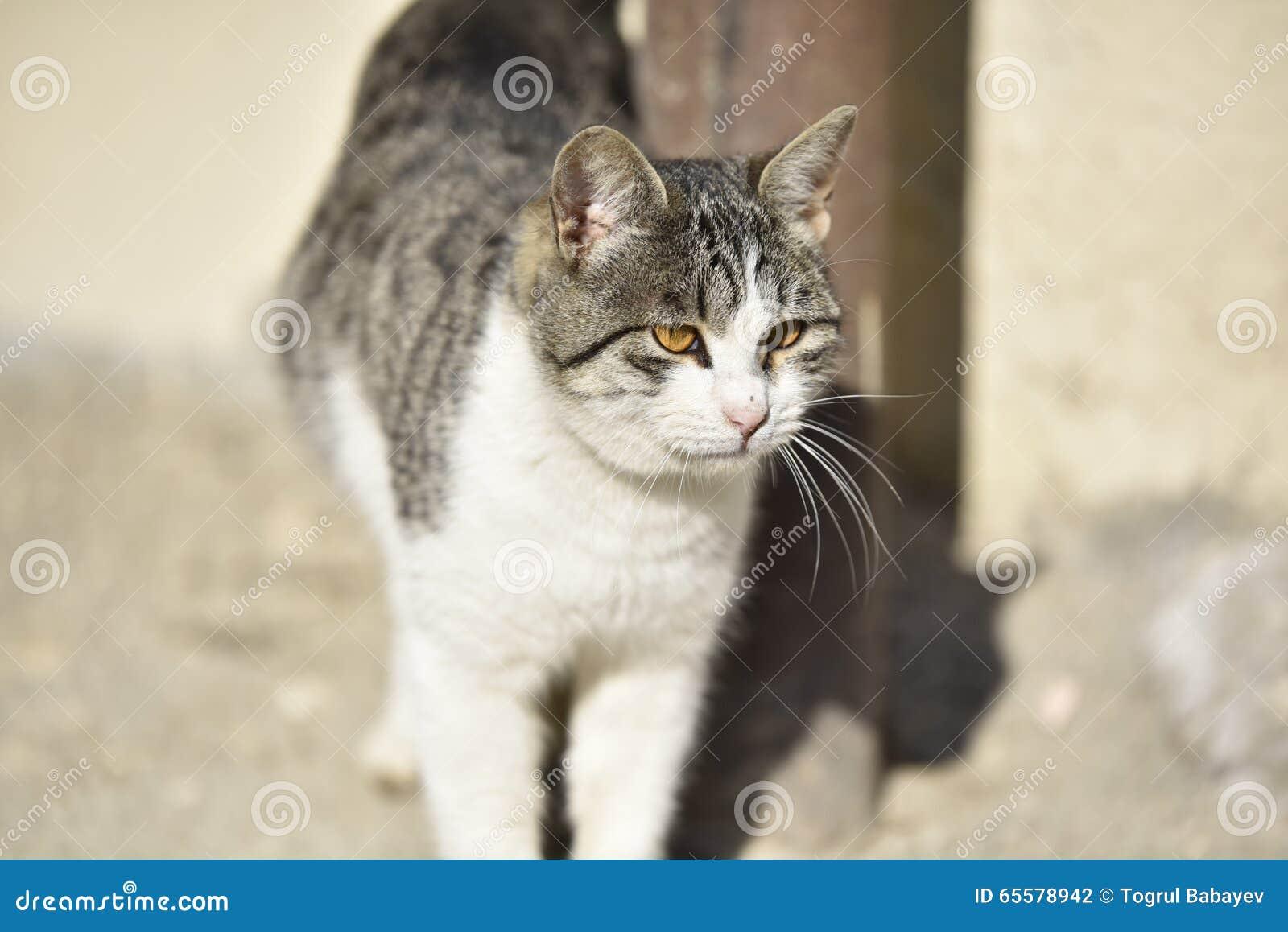 Fim da face do gato acima