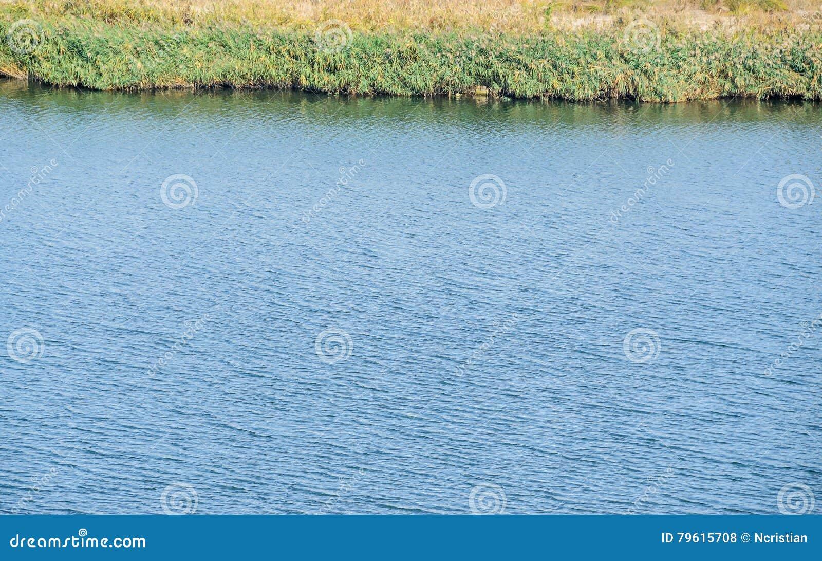 Fim da textura do lago water acima da vegetação exterior