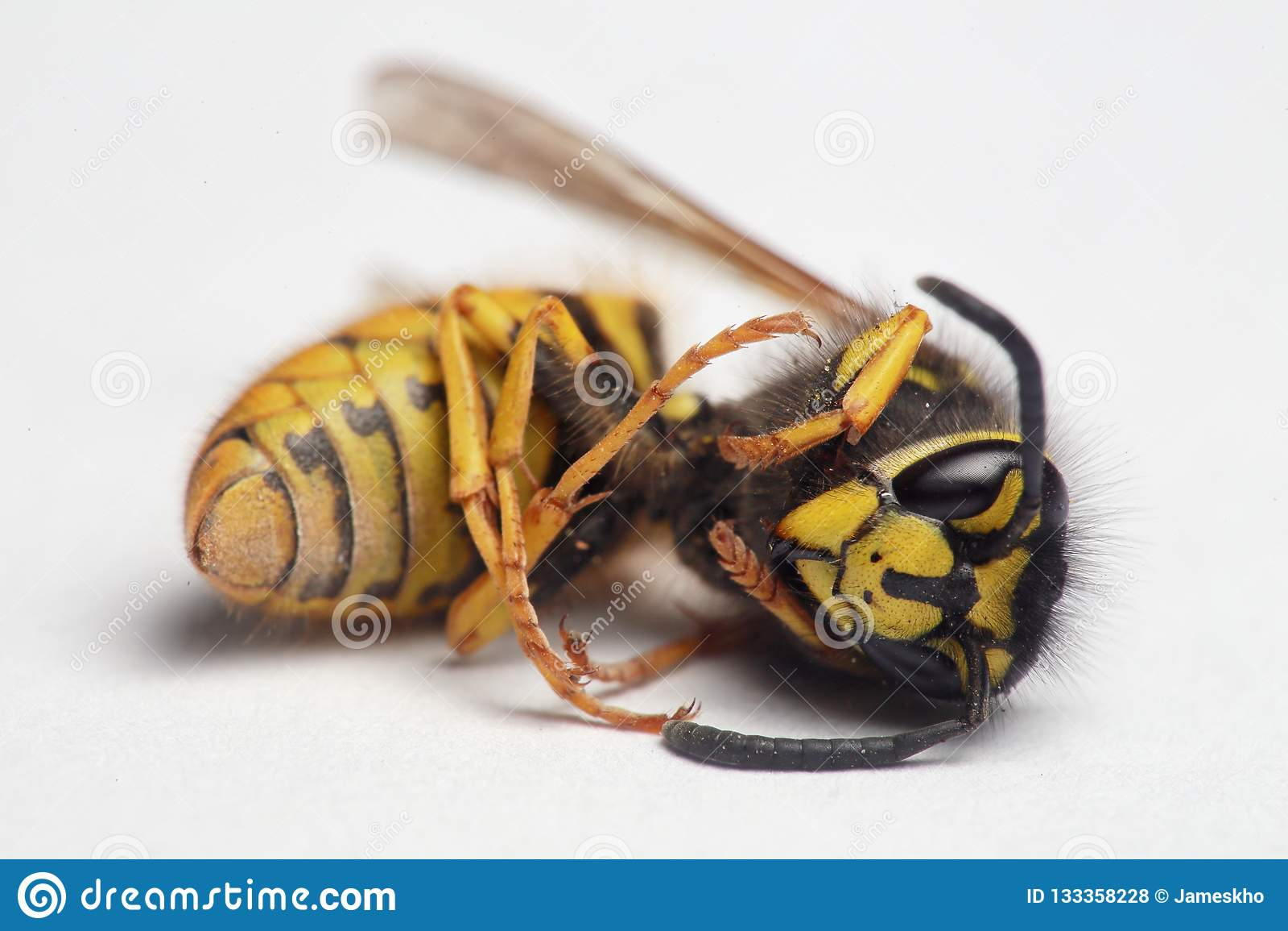 Fim europeu da vespa acima