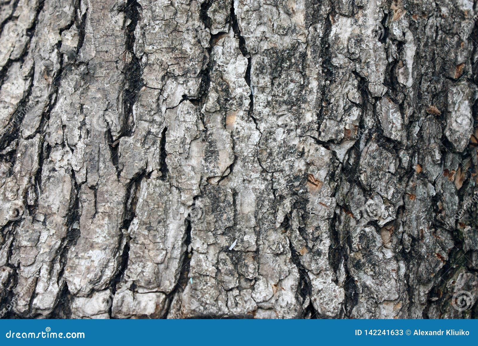 Fim gasto de madeira natural velho do fundo acima, fundo de madeira velho, textura do uso de madeira da casca como o fundo natura