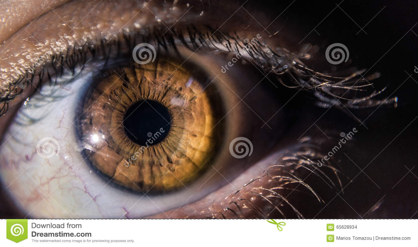 Fin d oeil de jaune de Brown