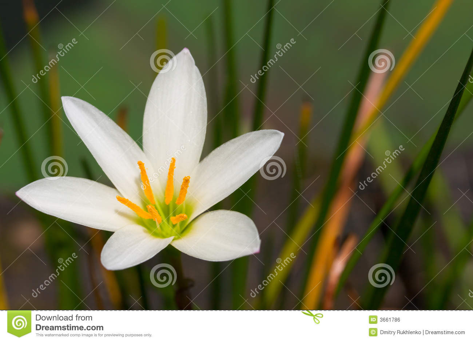 Fin de fleur blanche vers le haut