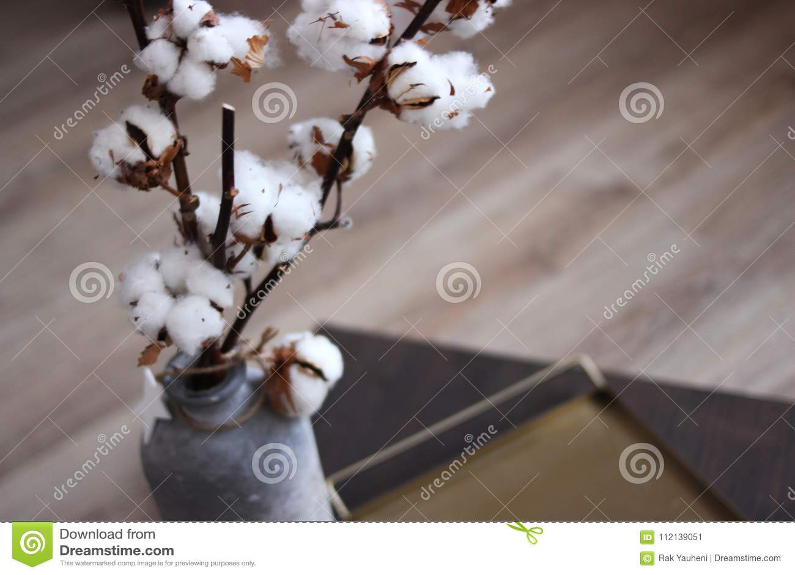Branche Fleur De Coton fin de fleur de coton dans le vase une branche de coton dans