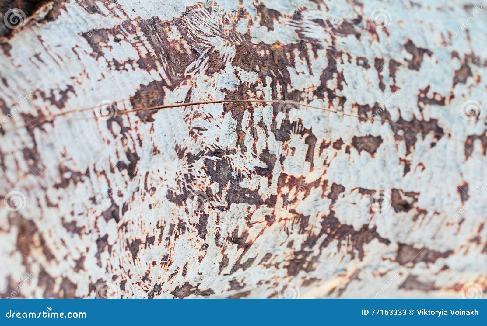 Fin de texture d arbre