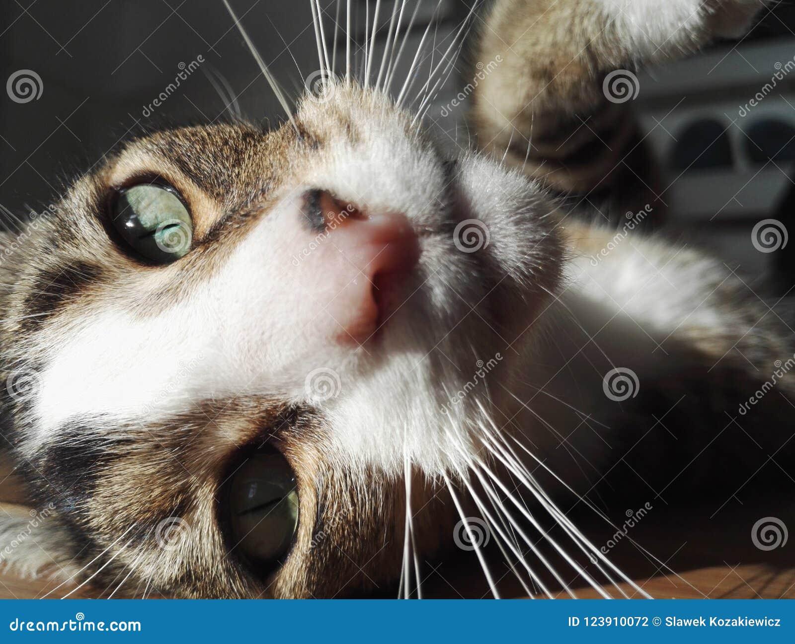 Fin de visage de chat vers le haut des favoris de nez