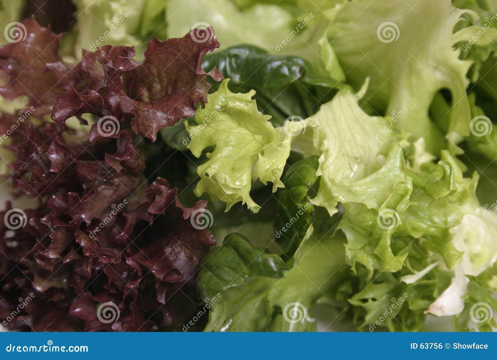 Download Fin Mélangée De Laitue Vers Le Haut Photo stock - Image du nourriture, rouge: 63756