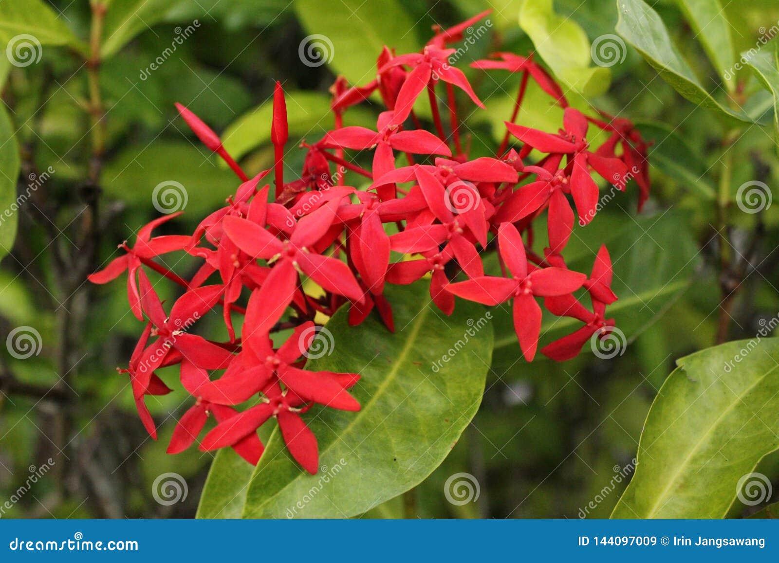 Fin rouge de fleur de transitoire et fond de feuilles