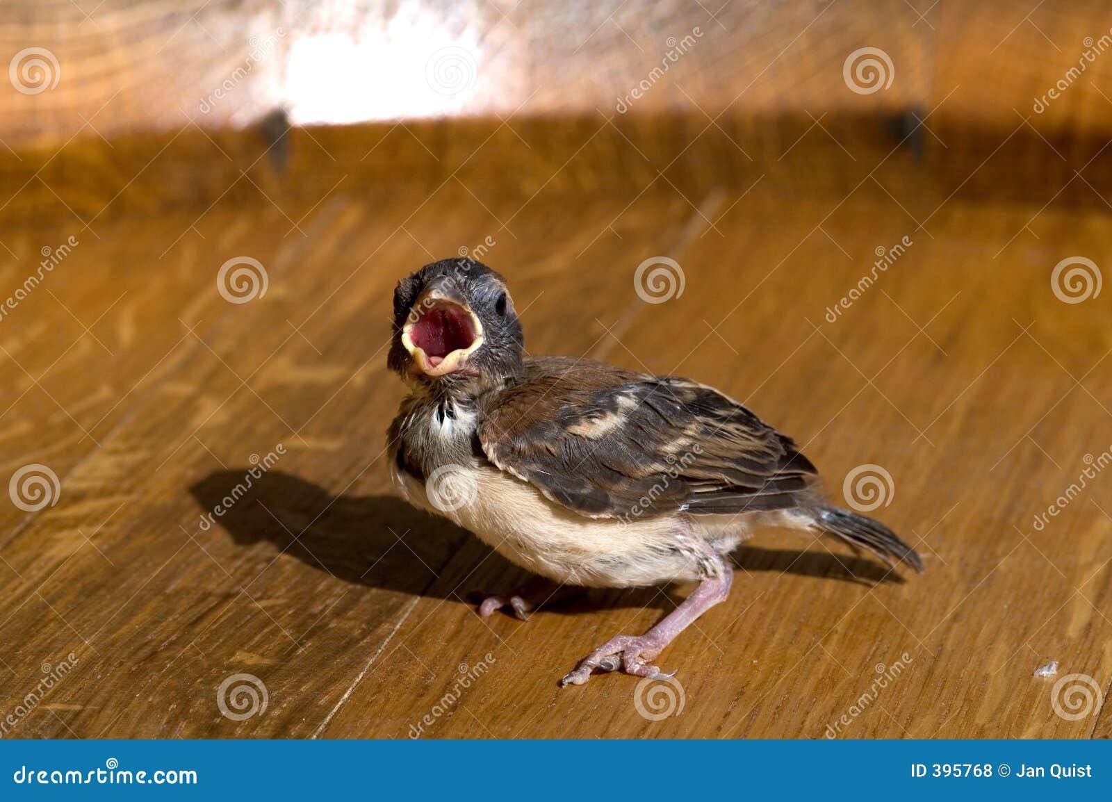 Finch μωρών