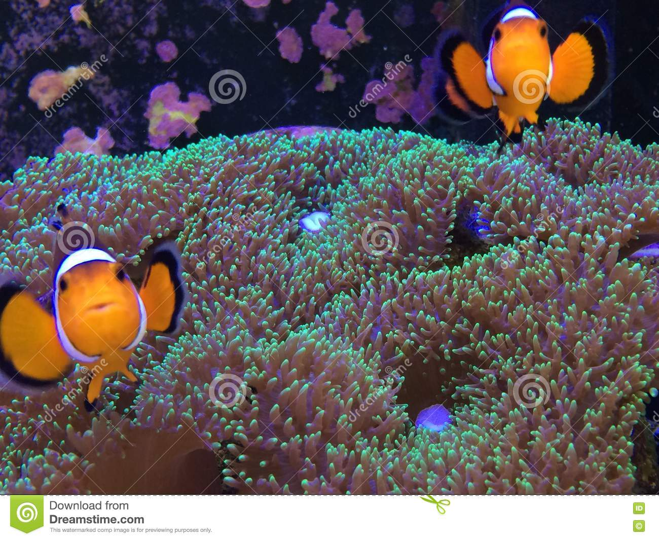 Fish in nemo aquarium - Finding Nemo On A Real Fish Tank
