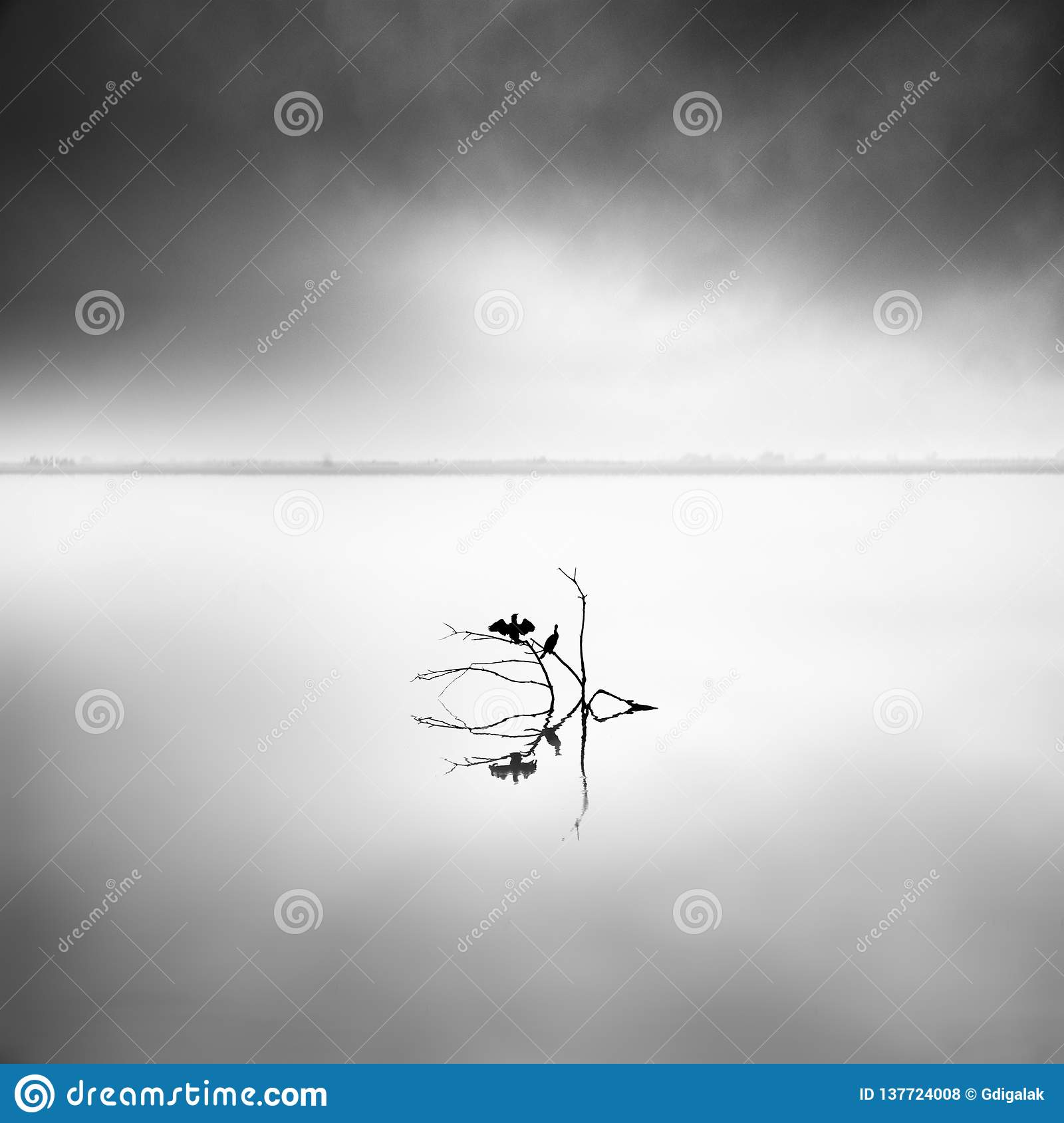 Minimal waterscape with plants and birds in the water