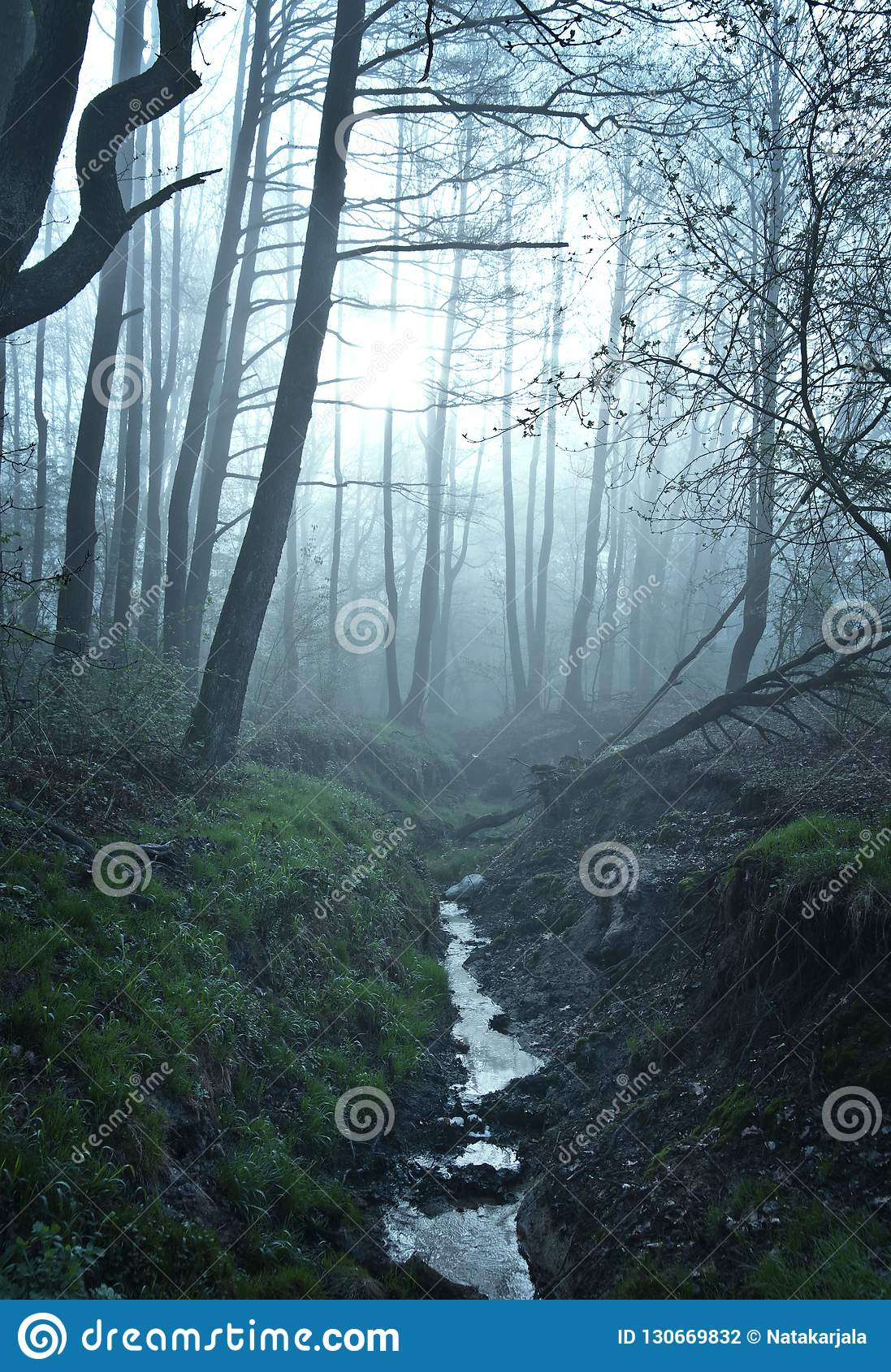 Fine art fantasy color outdoor nature image of a small river / creek in a foggy winter forest with rocks,undergrowth,bridg