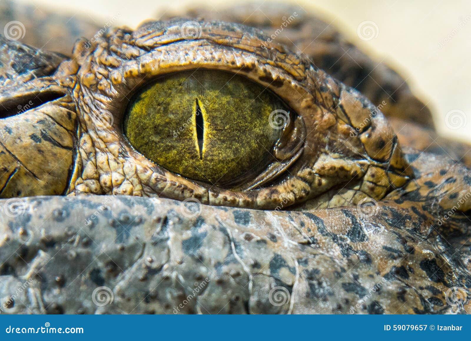 Fine dell occhio dell alligatore del coccodrillo su