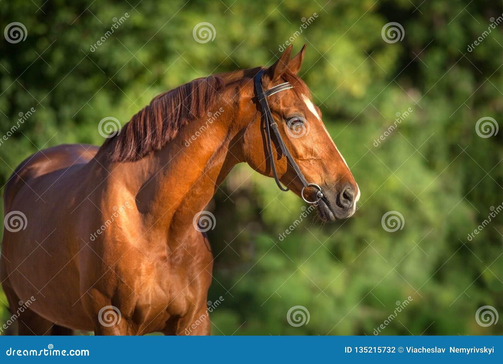 Fine rossa del cavallo su