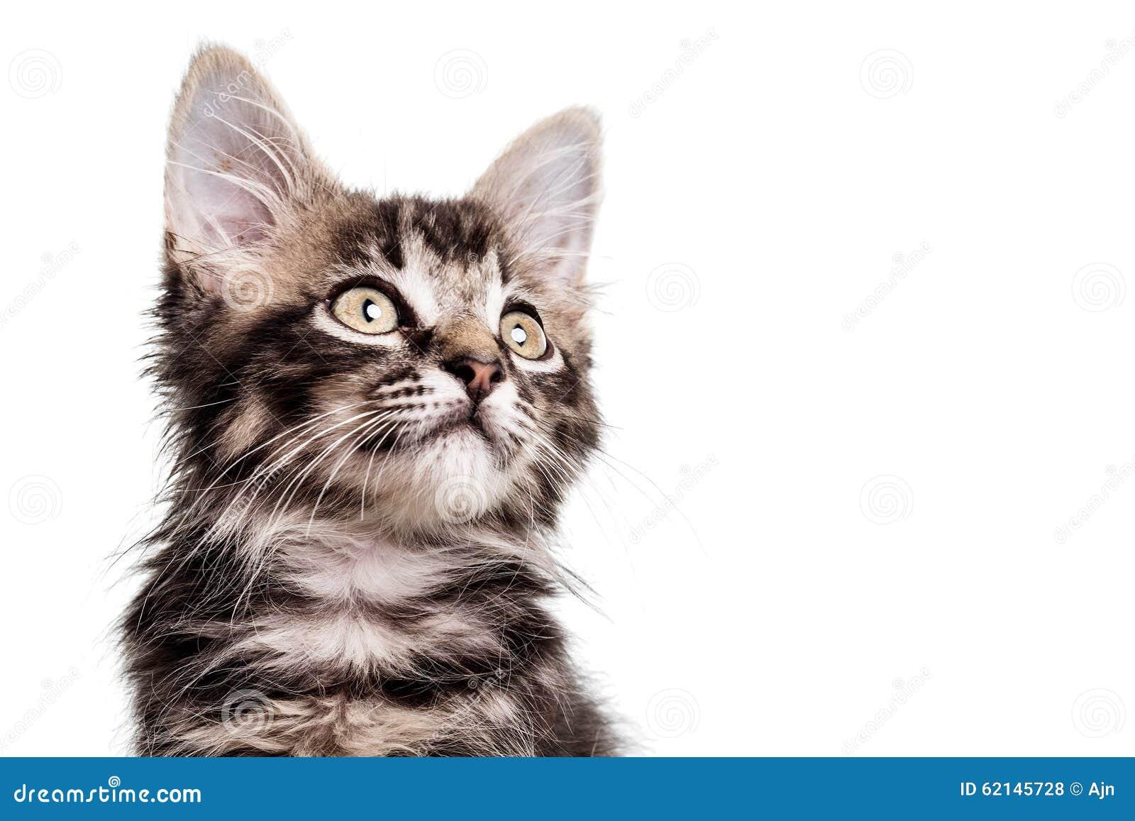 Fine simile a pelliccia sveglia del gattino su