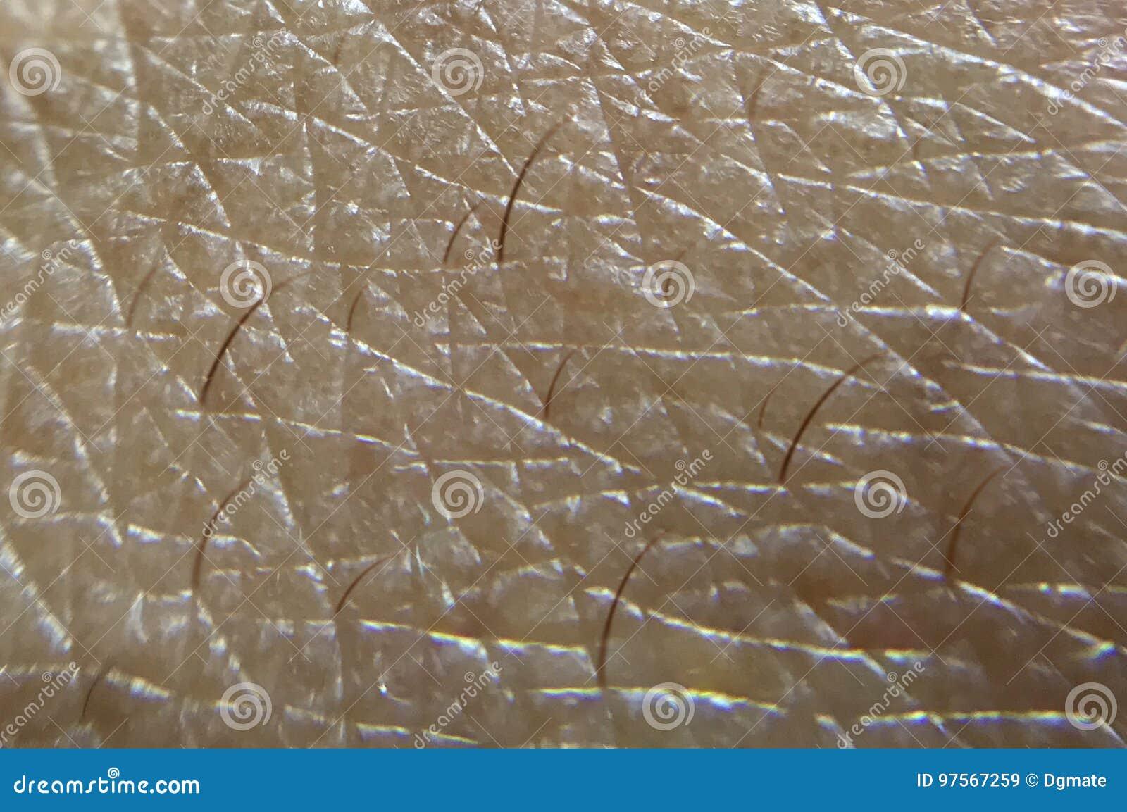 Fine umana della pelle sul colpo